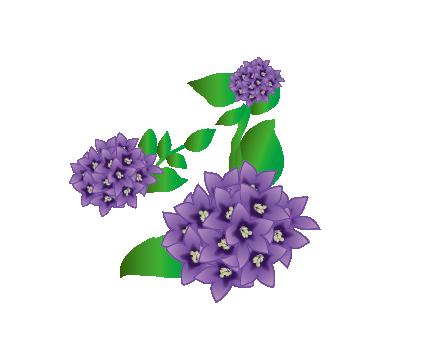 181114-자주꽃방망이-01.png