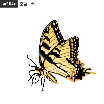 210226호랑나비-01.png